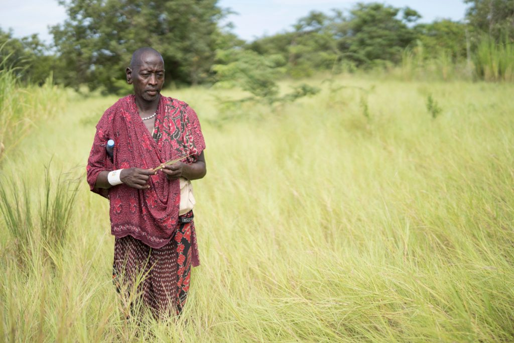 Ein Masai alleine in einer Wiese mit hohem Gras