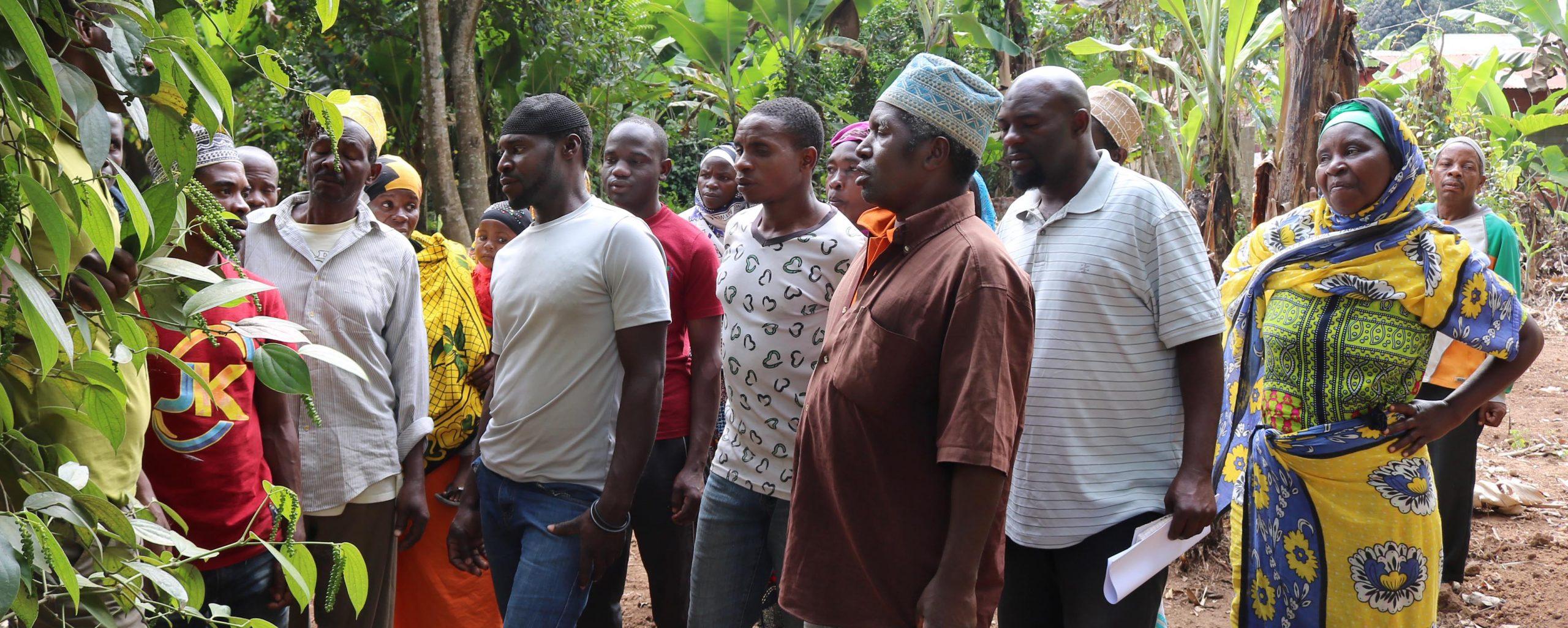 Bauerngruppe schaut sich Pfefferpflanze an