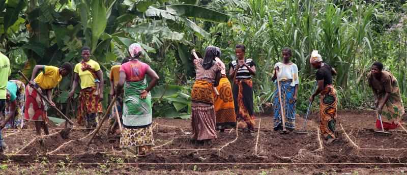Kleinbäuerinnen bei der Feldarbeit