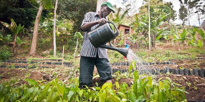 Bauer gießt Baumsetzlinge